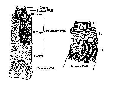 Picture of cotton fiber