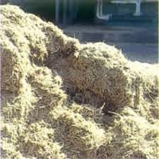 picture of bagasse