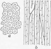 picture of bast fibers