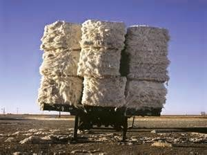 image of bale of cotton