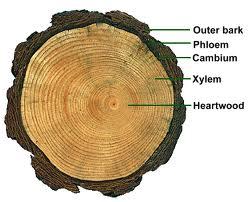 picture of heart wood