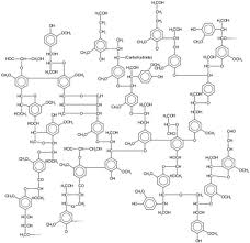 picture of lignin formula