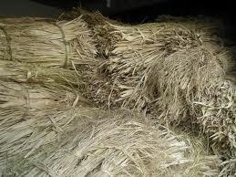 picture of mitsumata fiber